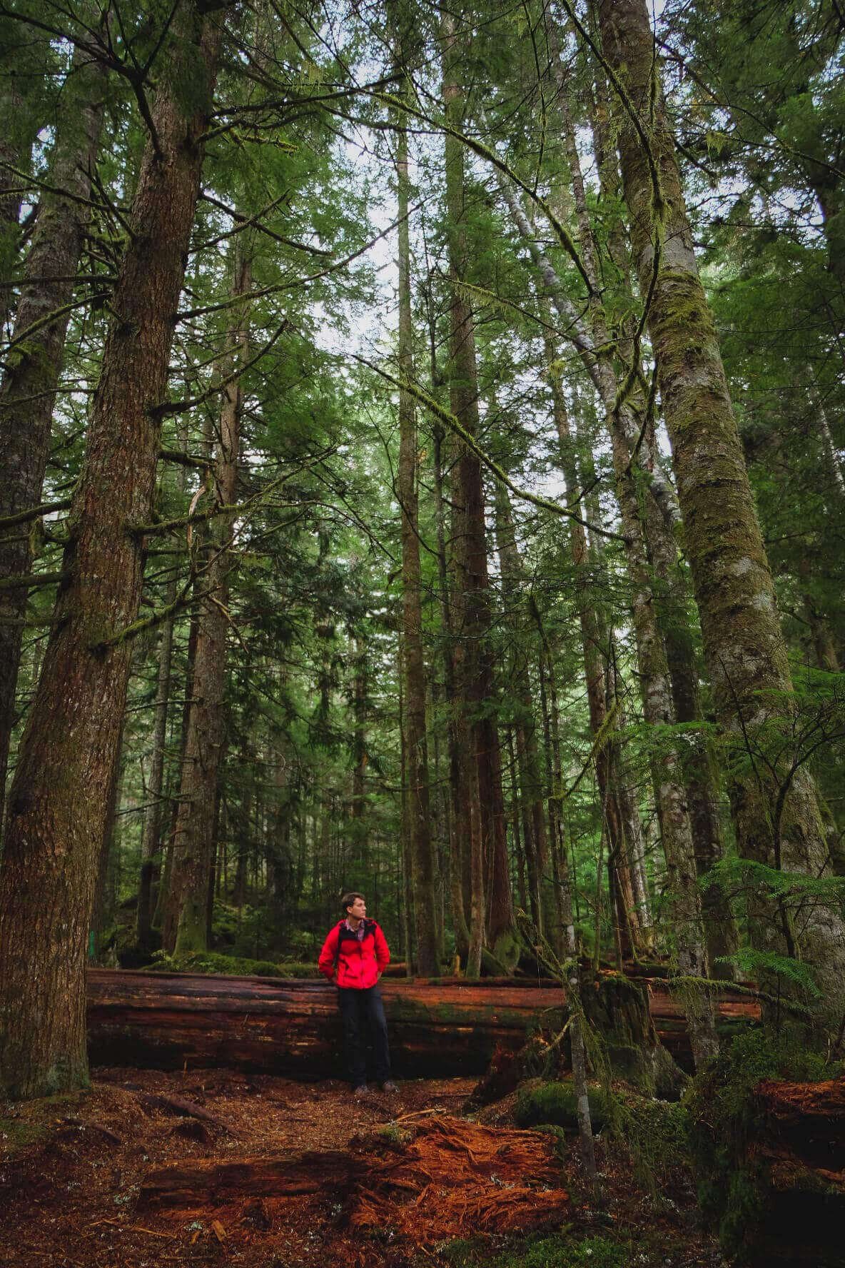 British Columbia conifer forest