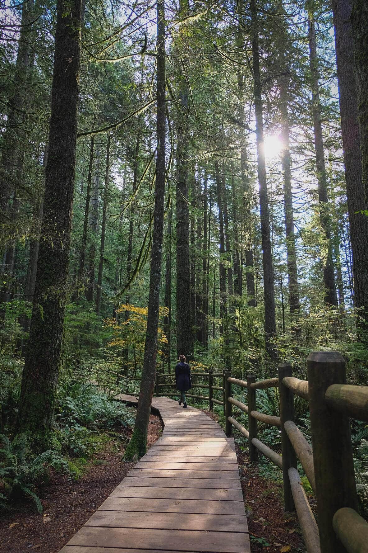 Lynn Canyon: British Columbia Road Trip Itinerary