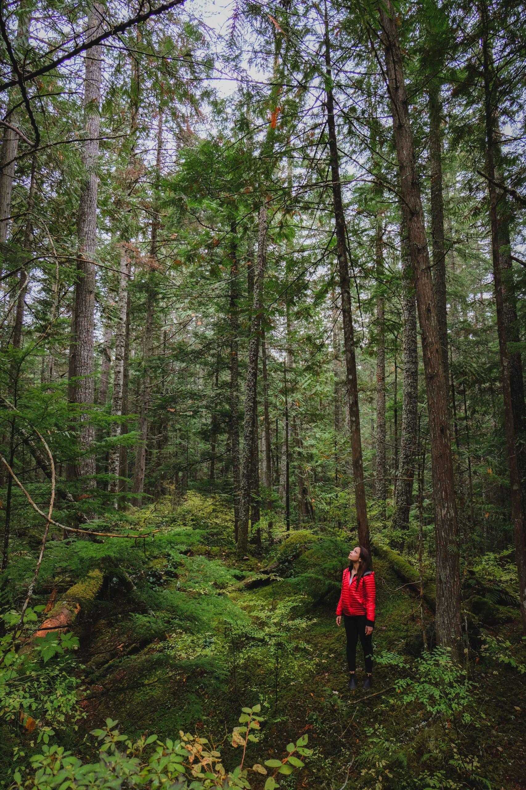 Hiking to Brandywine Falls