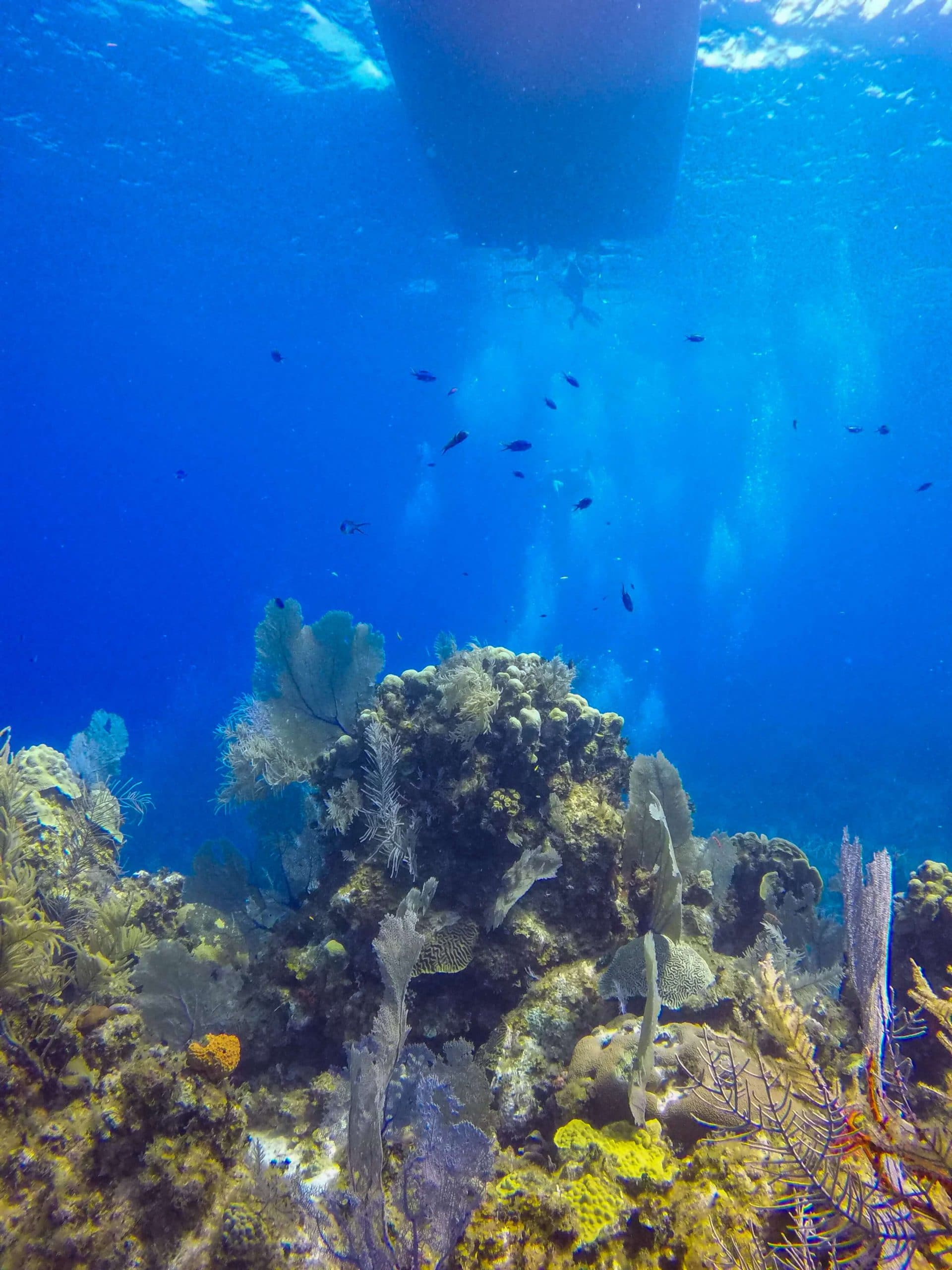 best dive sites in the Caribbean