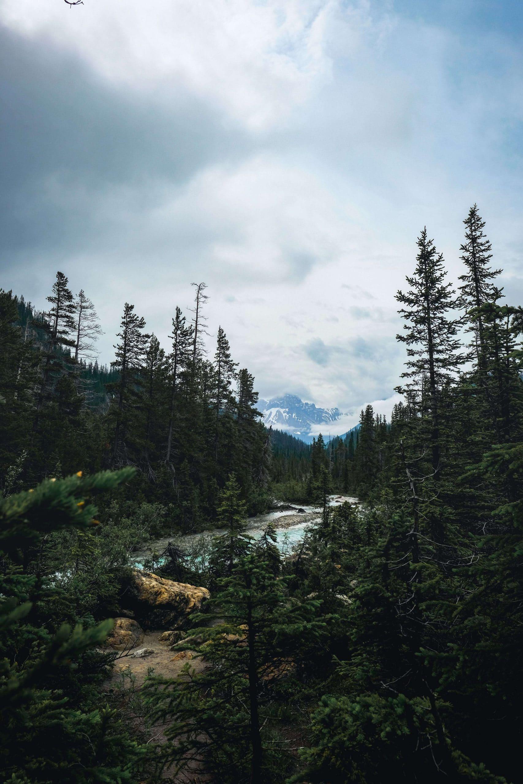 Takakkaw Falls Hike