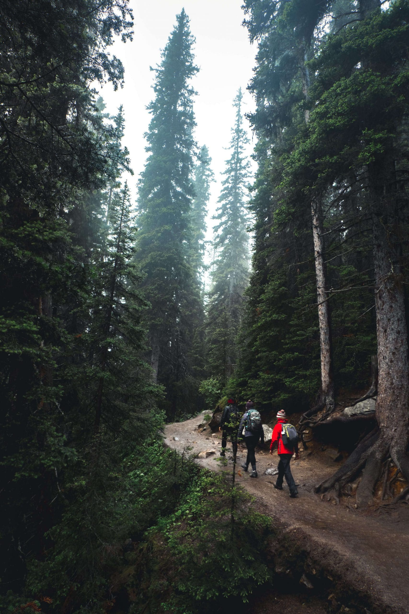 Hiking - Free things to do in Banff