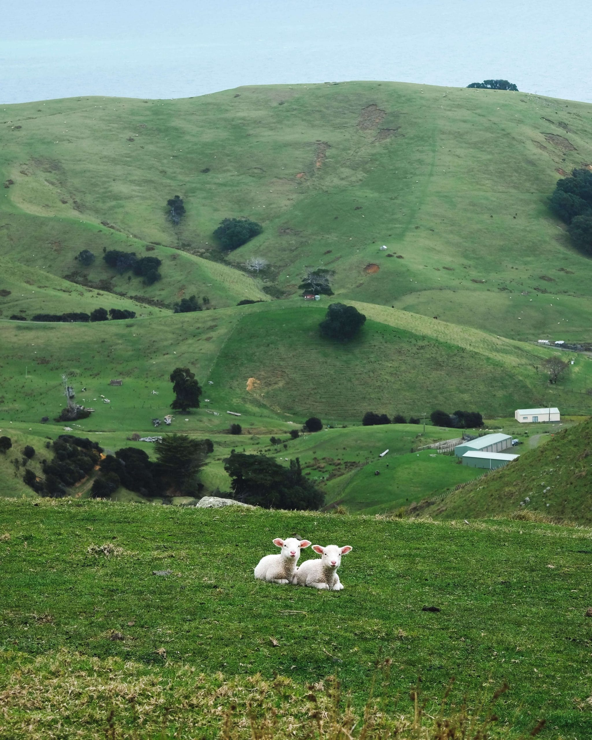 Spring is the best time to visit New Zealand because its lambing season