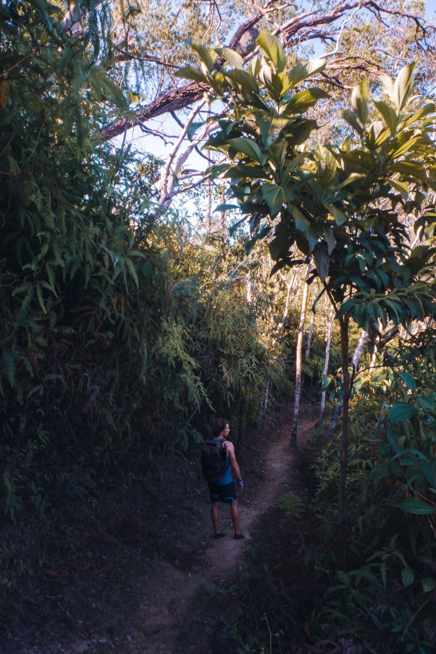 The hike to Tiger Fern Falls is strenuous and follows a well maintained hiking trail through the jungle