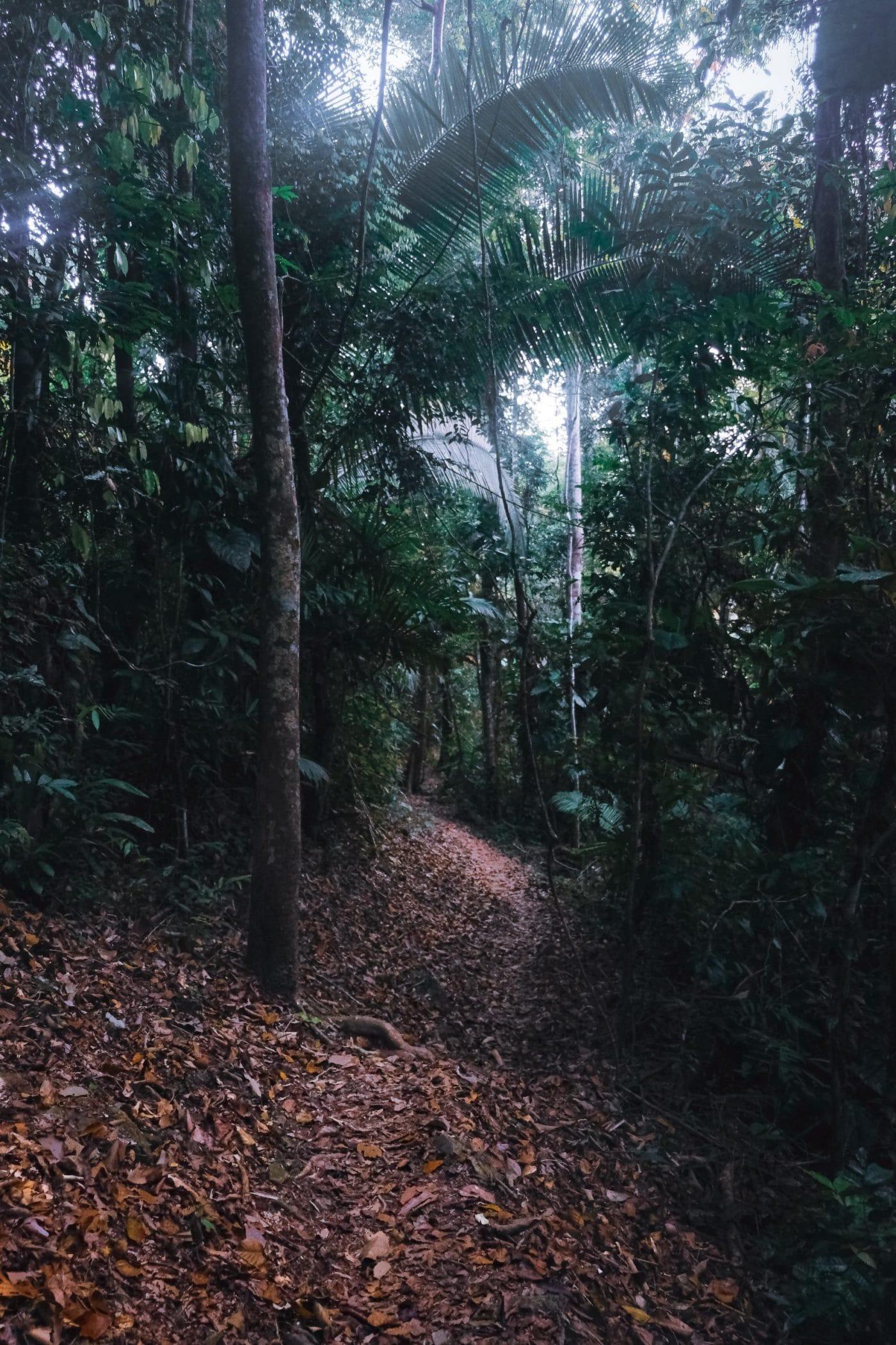 Belize jungle hiking trail