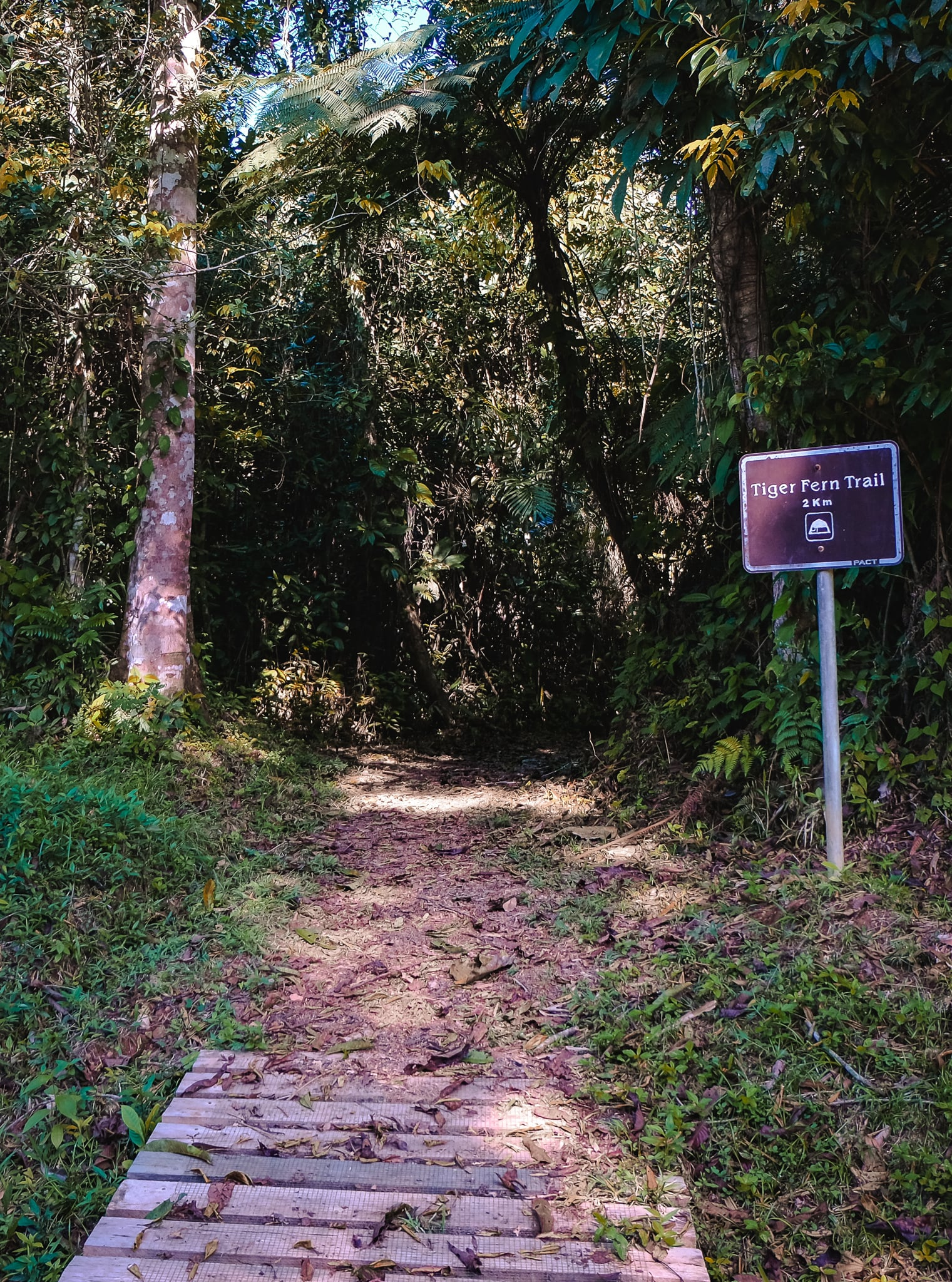 The trailhead to Tiger Fern Falls is located off the access road