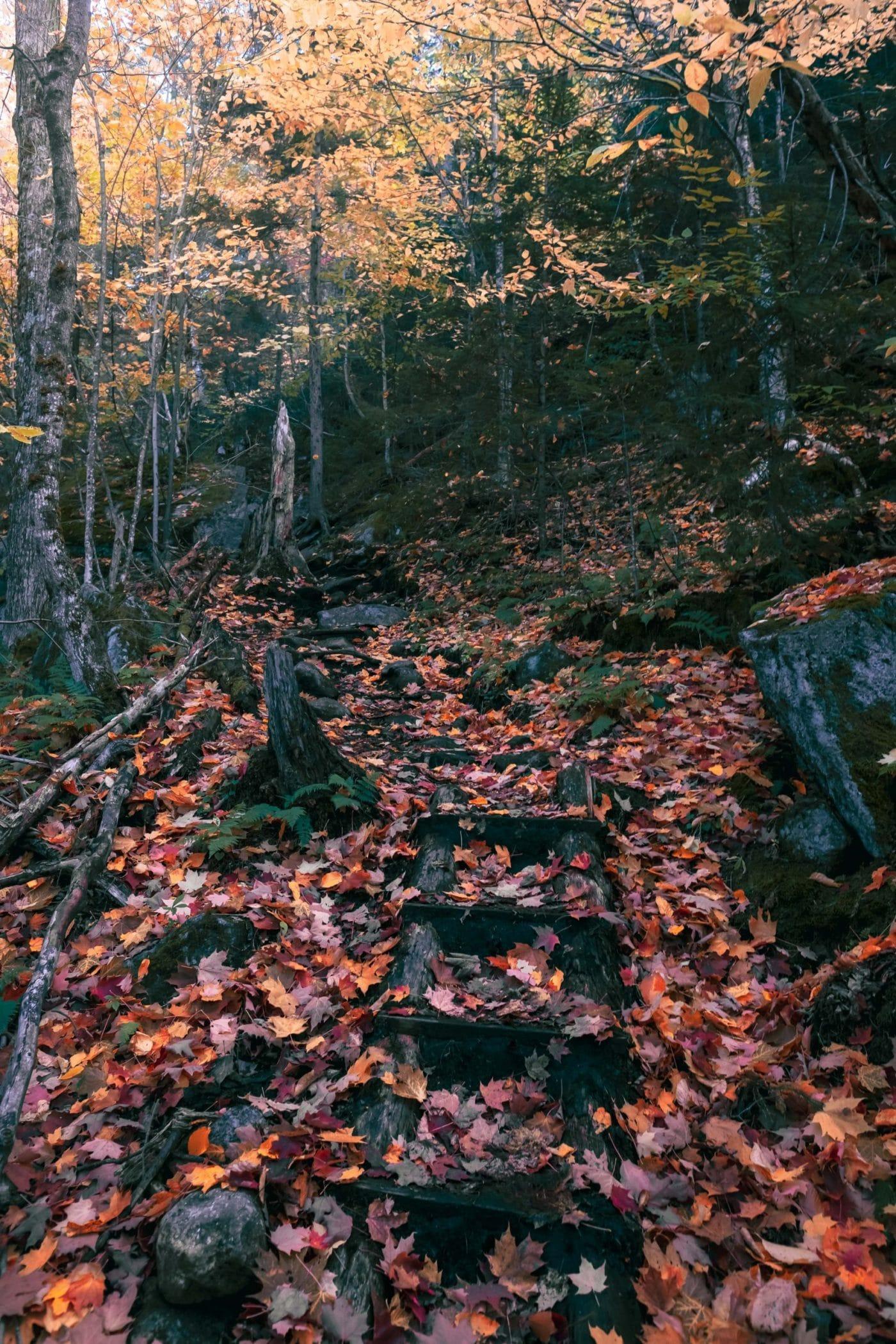 The trail to Indian Head, Adirondacks