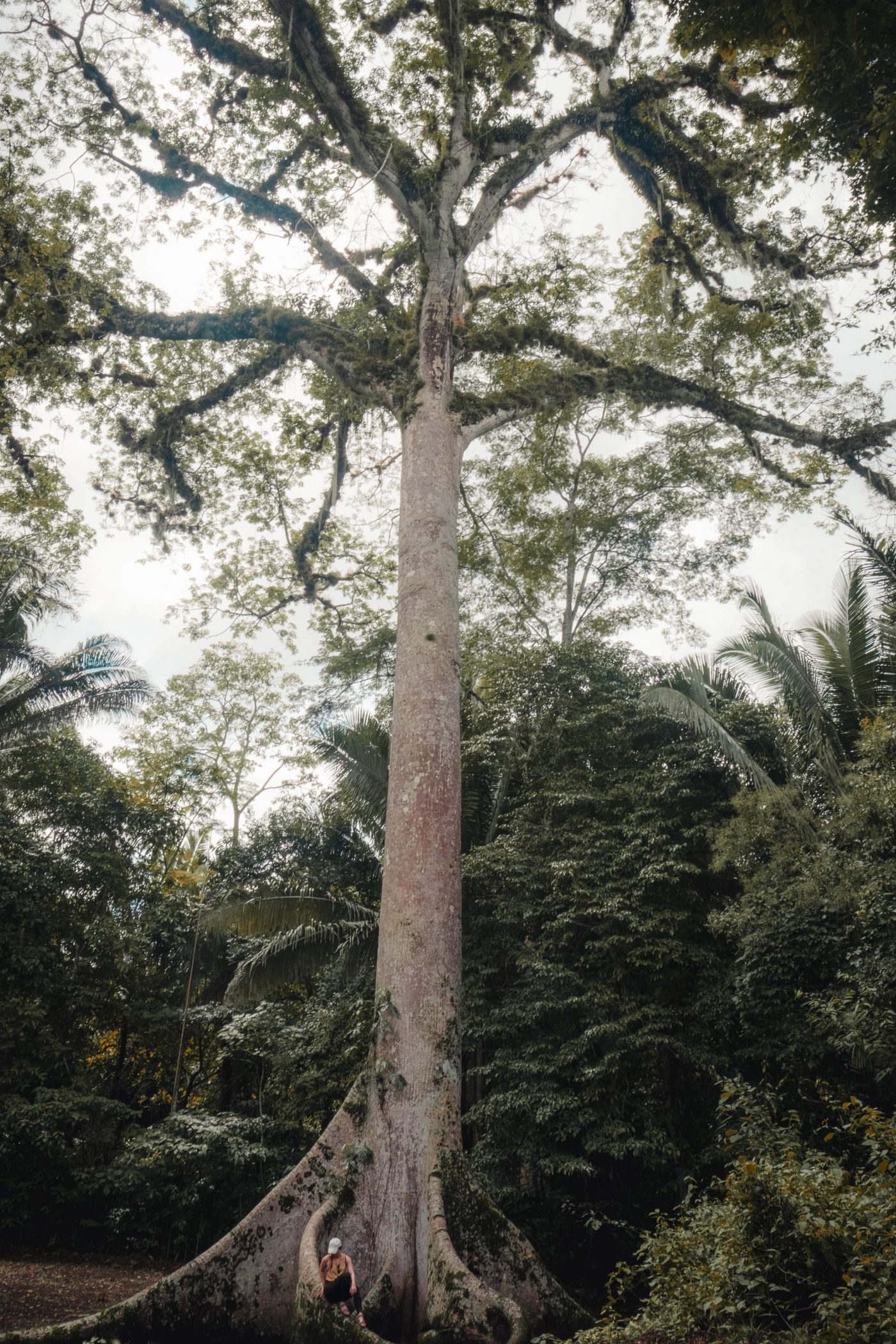 The story of Ceiba Trees in Central America